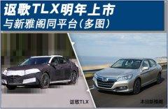 讴歌TLX明年上市 与新雅阁同平台(多图)